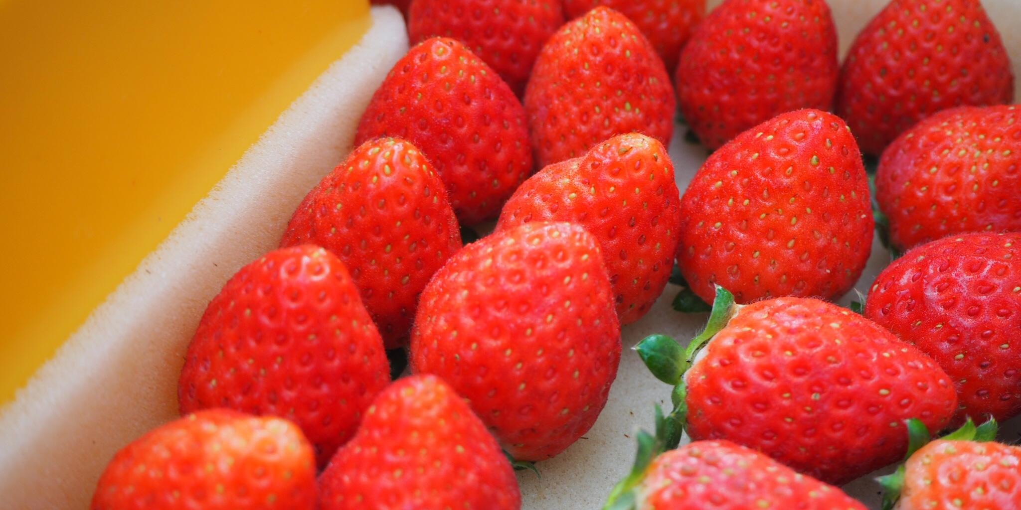 [Underground + Farming] Oya Summer Strawberry