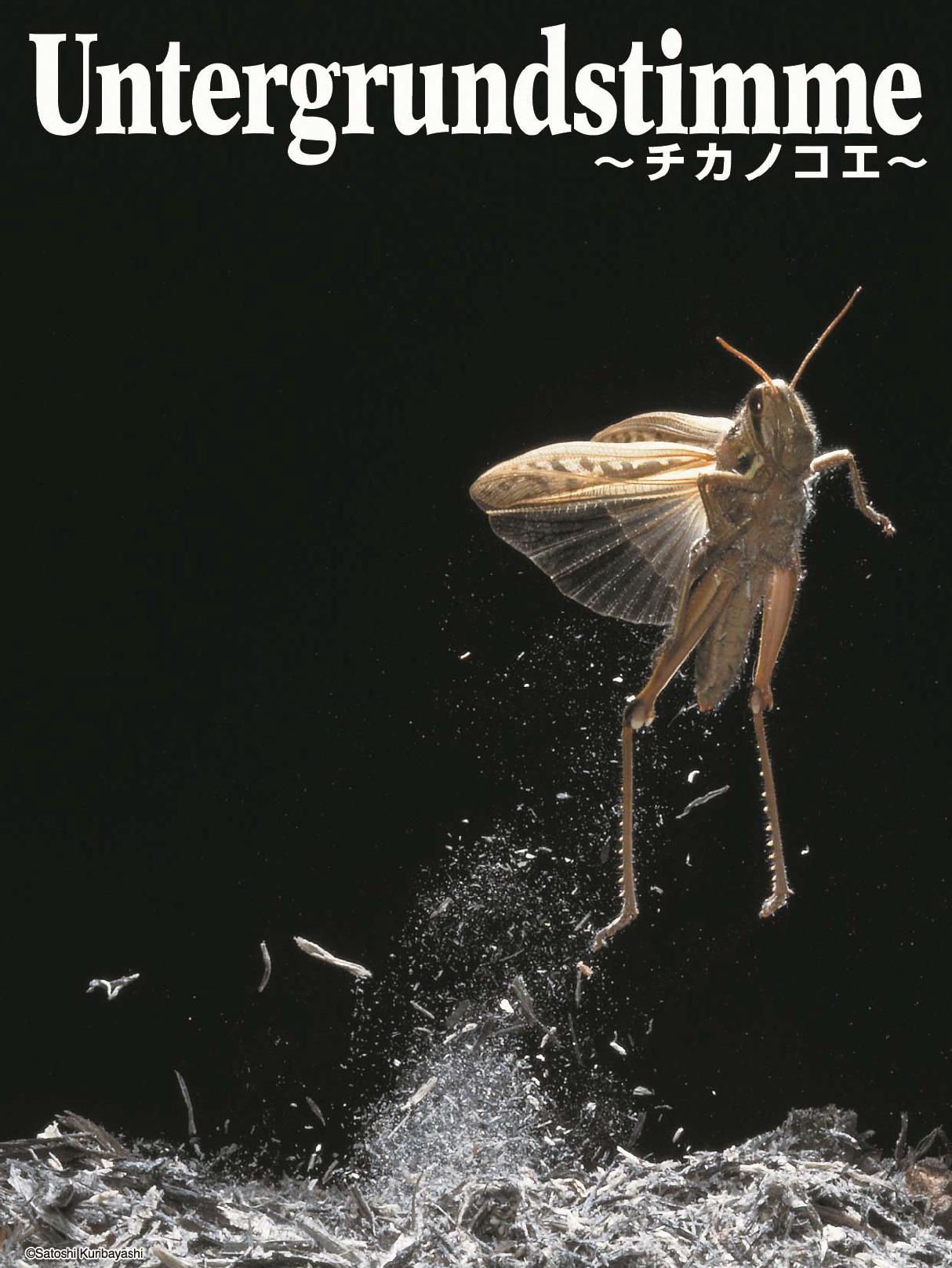 アートインスタレーション「Untergrundstimme~チカノコエ~」【10/31(土)~ 11/8(日)】